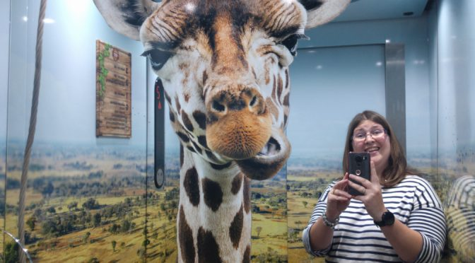 Celebrating at Chessington World of Adventures
