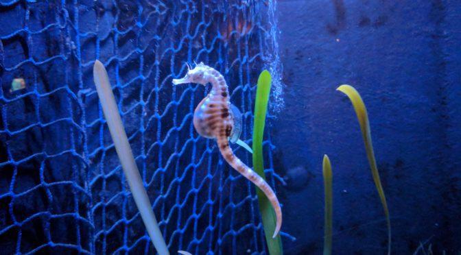 Sea Life Centre Gt Yarmouth