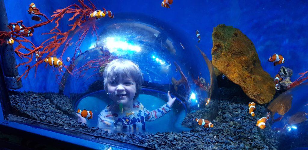 Sea life centre hunstanton